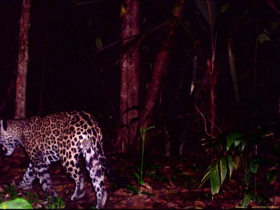Casa Grande: Camera trap/at night