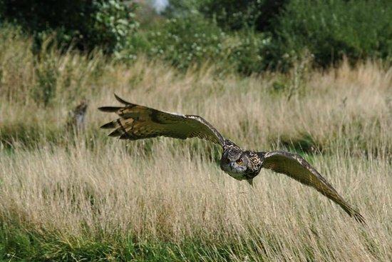 The Barn Owl Centre : European Eagle Owl