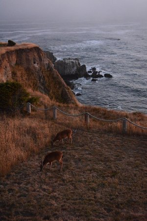 Spyglass Inn at Shelter Cove : Wildlife