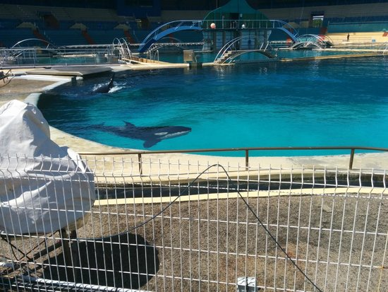 Marineland : Orques