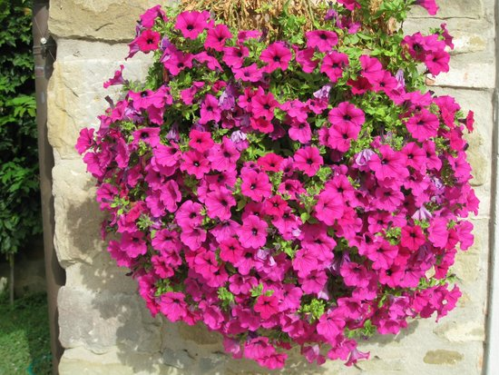 Relais La Corte dei Papi: Flowers on the property