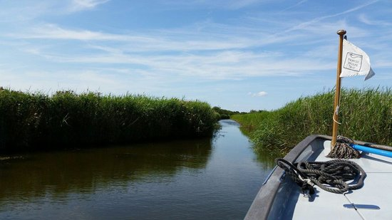 Hickling Broad: The reedbeds
