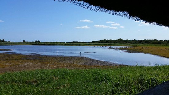 Hickling Broad: View from birdhide