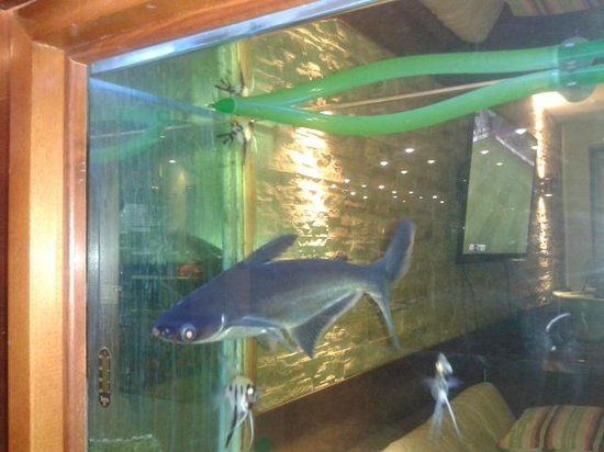 Venezia Resort: аквариум в холле