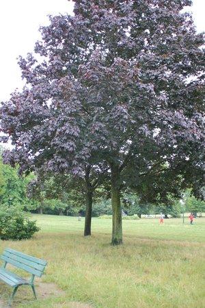 Bois de Vincennes: Красота леса