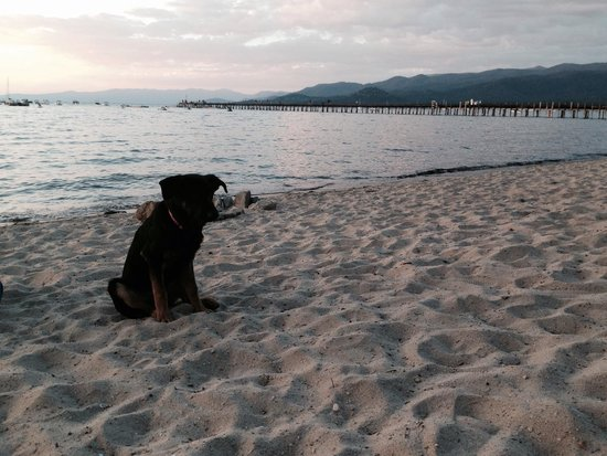 Beach Retreat & Lodge at Tahoe: Our Pup had a great time!