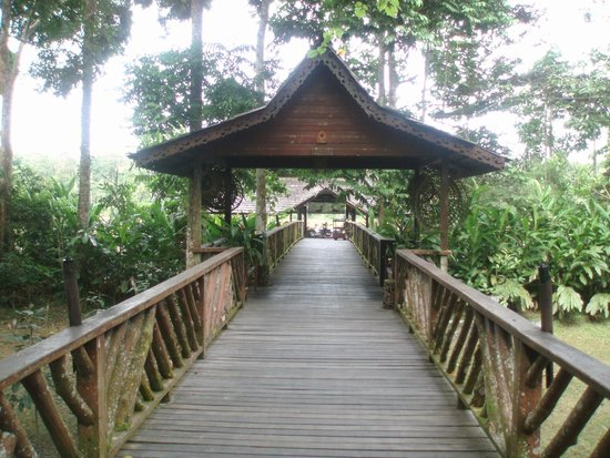Sukau Rainforest Lodge : Sukai Rainforest Lodge Walkway