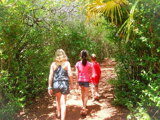 Tom Moore's Jungle : in the jungle