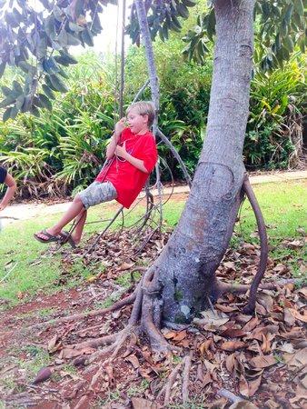 Tom Moore's Jungle : tarzan