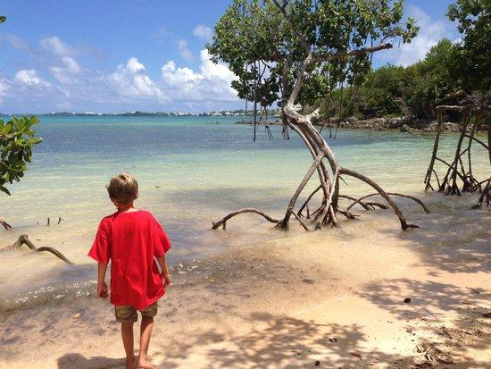 Tom Moore's Jungle : hidden beach
