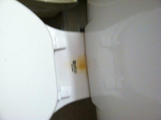 Forest Dunes Resort: Fresh urine