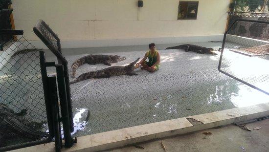 Baan chivit crocodile show: crocodile show