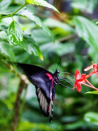 The Butterfly Farm (La Ferme des Papillons): Butterfly Farm