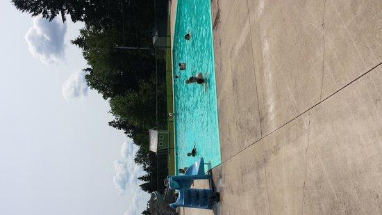 Campers City RV Resort: pool