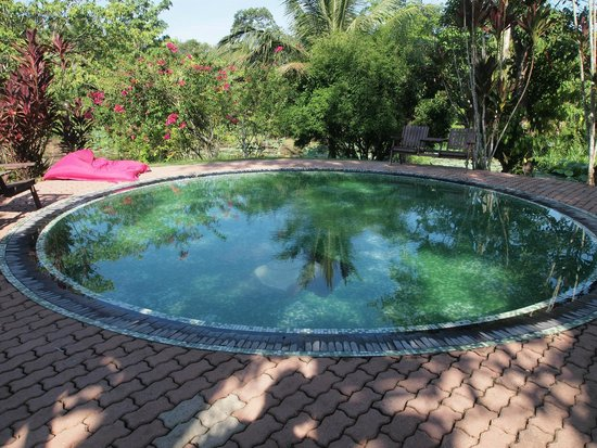 Sepilok Forest Edge Resort: small pool