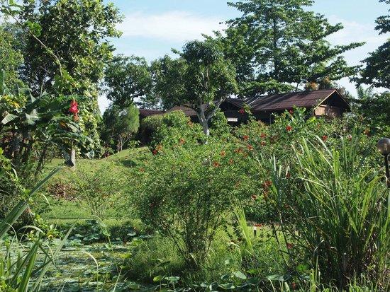 Sepilok Forest Edge Resort: Garden