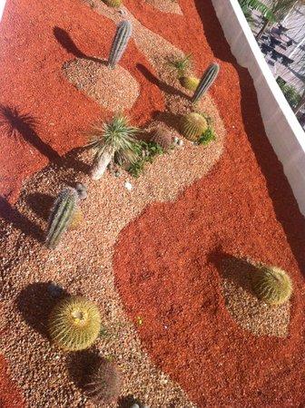 Sensimar Lindos Bay Resort & Spa : Кактусиная плантация на крыше 1го этажа