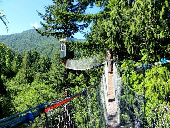 Cedar Creek Treehouse: Sunbridge, Rainblw Bridge and Observatory