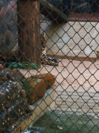 Bosque Guarani zoo: Lonely