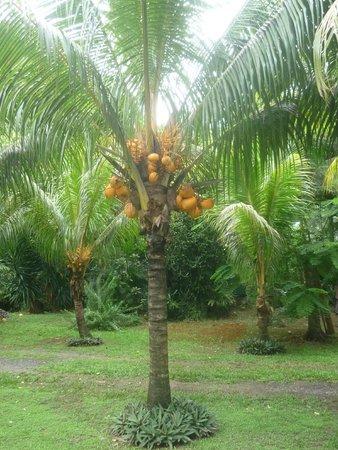 West Indies Cottage: jardin