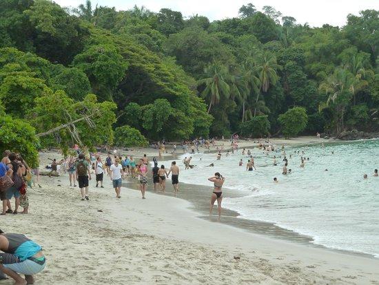 Falls Resort at Manuel Antonio : Playa del parque nacional
