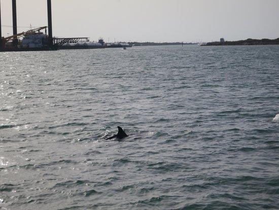 Port Aransas Beach: Dolphin Cruise at Port A