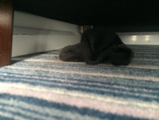 Holiday Inn Express Sheffield City Centre : Somebody else's sock under the chair..