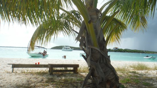 Chat 'N' Chill: BBQ UNder the Palm