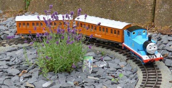 Bure Valley Railway : Thomas in miniature!