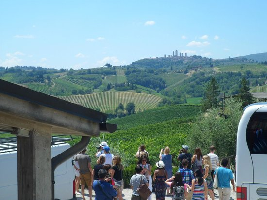 Walkabout Florence Tours : At the Vinyard