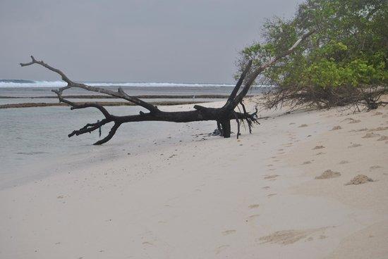 Meemu Atoll: beach