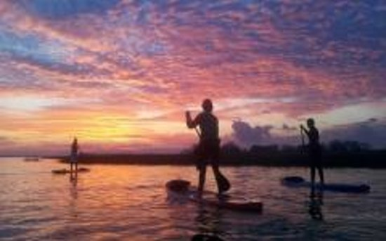 Nature Adventures : Paddleboard with us on Shem Creek!
