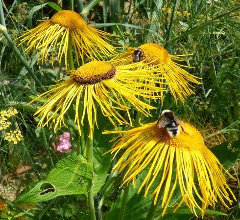 East Ruston Old Vicarage Garden: Bee haven