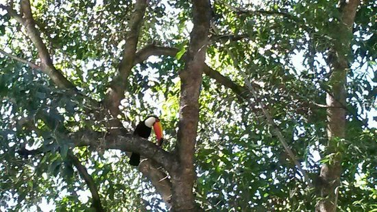 Zoologico de Americana: Toucan