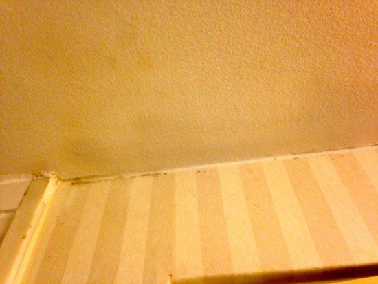 Millennium Harvest House: Bathroom Mold