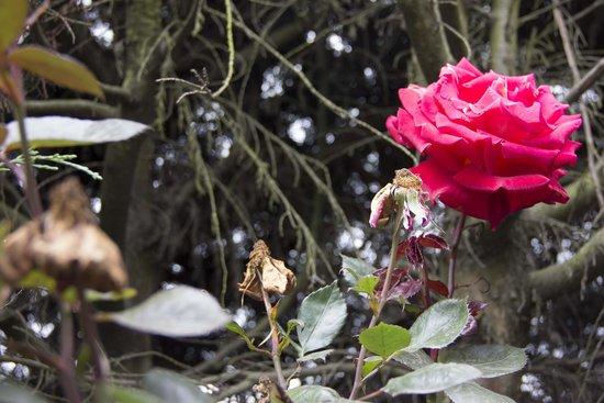 Cabanas Los Volcanes: Roses
