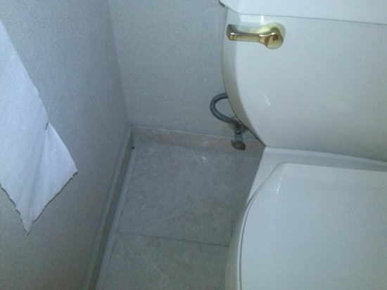 Park MGM Las Vegas: Même cafard entre toilette et mur salle de bains