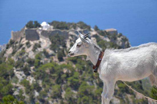 Monolithos Castle: vue depuis la route
