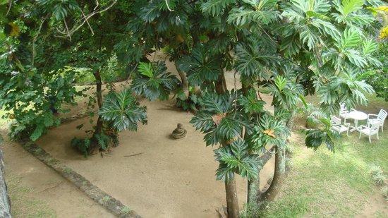 Merville Beach Hotel : Jardin