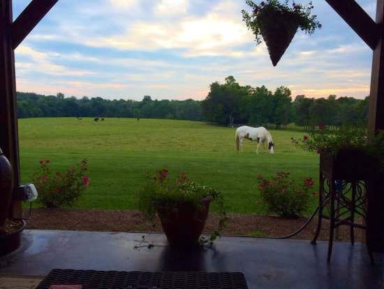 Buffalo River Farm and Studio Bed and Breakfast: Stormy the horse has the most beautiful blue eyes