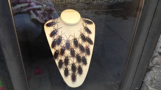 La Basilica Galeria: cockroach necklace displayed in the window