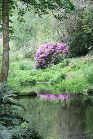 Clowance Estate: Walks around the estate take in woodland paths and streams