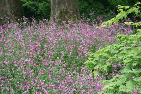 Clowance Estate: Springtime in May and early June is very colourful