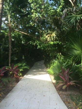 Barcelo Maya Tropical: one of the walkways to veracruz building