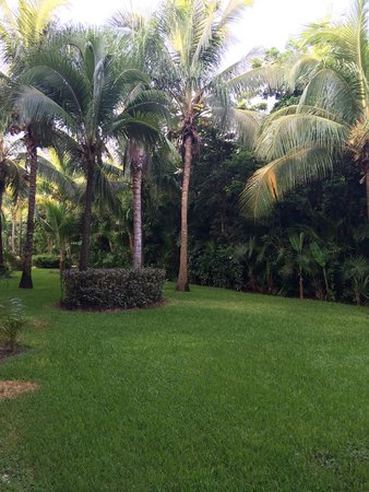 Barcelo Maya Tropical: view of garden from room