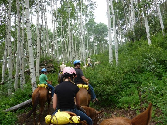 Vail Stables: Through the Aspen trees