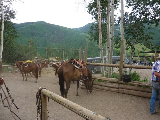 Vail Stables: Waiting to get assigned to a horse