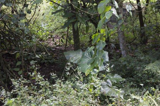 La Casa Verde- Eco Guest House: Vegetation