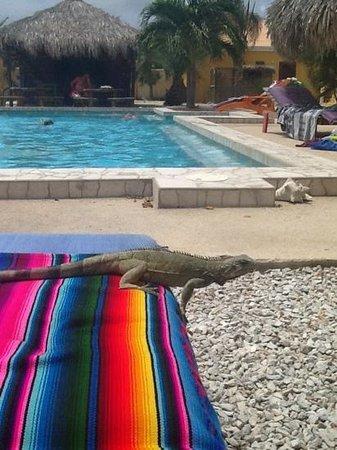 Djambo: zwembad