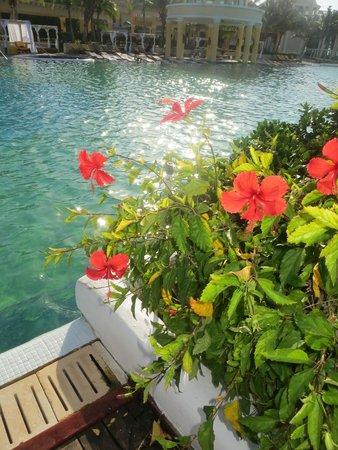 Iberostar Grand Hotel Paraiso: Beautiful landscaping